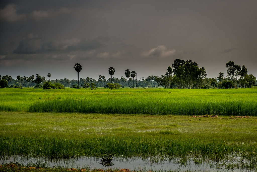 Cambodia-Rice-Filed